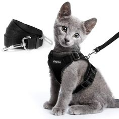 Maine Coon Kittens, Cats And Kittens, Yorkies, Double Usage, Cat Harness, Cat Leash, Small Cat, Cat Collars, Cat Design