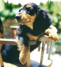 What a pretty #puppy!