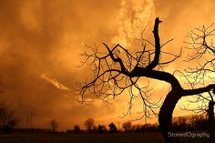 Tree Dancing In The Sunset