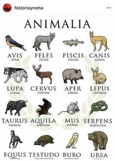 Latin Quotes, Latin Phrases, Latin Words, Latin Language Learning, Teaching Latin, Locuciones Latinas, French Flashcards, Anima Mundi, World Languages