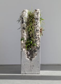 Solo show at Sarah Cottier Gallery, comprised of multiple forms with cement, marble waste, limestone, steel slag and coal ash as sculptural materials, and inhabited by a complex mix of plant species native to the east coast of Australia. This exhibition a…