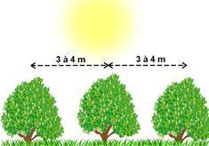 Distances de plantation entre les arbres fruitiers :