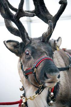Reindeer Rudolf #Moose Child Christmas Fancy Dress Costume Ages 2-13 Years