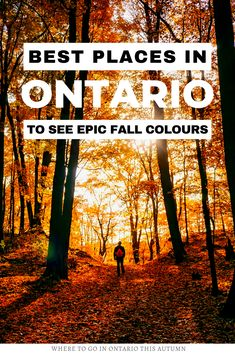 Fall in Ontario is the most magical time of year to get out and explore back roads, small towns and go leaf-peeping. Here are the 10 best places to see the fall colours in Ontario I where to go in Ontario I places to go in Ontario I fall in Ontario I autumn in Ontario I Ontario in fall I Ontario fall colours I fall destinations in Ontario I where to go in Ontario in Fall I Ontario travel I fall in Canada I fall travel in Ontario I fall road trips in Ontario I autunm in Ontario I #Ontario… Amazing Destinations, Travel Destinations, Bag Essentials, Ontario Travel, Quebec City, Canada Travel, Where To Go, Cool Places To Visit, Travel Around