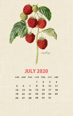 Botanical Fruit 2020 Calendar Printable Templates culinary Fruits Monthly Planner In botany Aggregate fruit Ovary Latest Designs 12 Months Yearly One Page July Calendar, Printable Calendar 2020, Blank Calendar Template, School Calendar, Photo Calendar, Aesthetic Desktop Wallpaper, Wallpaper Iphone Cute, Iphone Wallpapers, Calendar Wallpaper