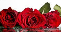 nőnapi kép - Google keresés Rose, Google, Plants, Pink, Plant, Roses, Planets