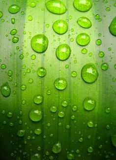 drops on green green