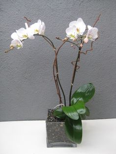 This is the perfect condolence gift as it is somber and long lasting and doesn't need much attention Orchid Plants, Orchids, Condolence Gift, Orchid Arrangements, Plant Design, Glass Vase, Flowers, Gifts, Home Decor