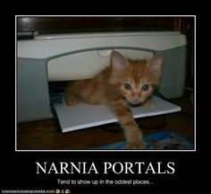 omg Narnia Portals show up in the weirdest places Narnia Movies, Narnia 3, Cair Paravel, Best Dog Food, Chronicles Of Narnia, Animal Memes, Animal Pics, The Funny, Funny Cats