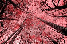 Beautiful pink trees #flowerbeauty