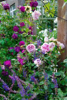 English Garden Design, Cottage Garden Design, Blue Garden, Colorful Garden, Spring Blooms, Spring Flowers, Beautiful Roses, Beautiful Gardens, Ikebana