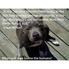 Blame the humans, not the dogs!!