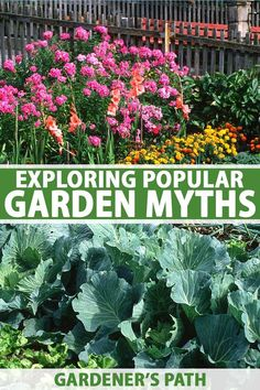 Helpful green-thumb facts, or fictional tales as old as time? When it comes to gardening myths and folklore, it can be hard to tell when the advice and stories of a long-gone era will actually come in handy. Let's take a look at the most popular and oft-repeated recommendations. #garden #gardeningtips #gardenerspath Vegetable Garden For Beginners, Gardening For Beginners, Organic Vegetables, Growing Vegetables, Gardening Tips, Organic Gardening, Outdoor Plants, Outdoor Gardens, Diy Projects On A Budget