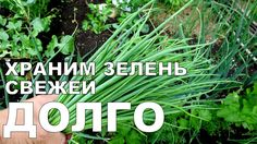 Храним ЗЕЛЕНЬ В ХОЛОДИЛЬНИКЕ долго / How to store GREENS in the refriger...