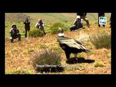 Clip liberación de Painamal - Música Roque Martínez