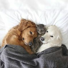 Animals Discover Cute Overload: Internets best cute dogs and cute cats are here. Aww pics and adorable animals. Animals And Pets Baby Animals Funny Animals Cute Animals Funniest Animals Funny Cats Wild Animals Cute Puppies Dogs And Puppies Animals And Pets, Baby Animals, Funny Animals, Cute Animals, Funniest Animals, Funny Cats, Wild Animals, Golden Retrievers, Cute Puppies