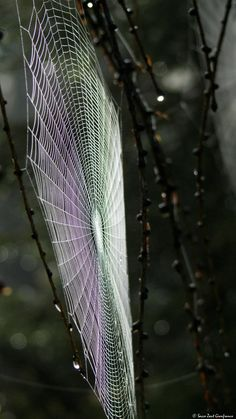 """imiging: """" - spider art Photograph by Gianfranco rushingriver.tumblr.com """""""