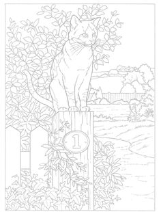 Coloring for adults - Kleuren voor volwassenen~ Enjoy everything about #cats - Get the latest Ozzi Cat Magazine! Click here >> http://OzziCat.com.au/issues
