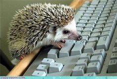 this resume is taking way too long to type!!