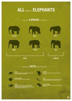 ผลการค้นหารูปภาพสำหรับ Asian elephant