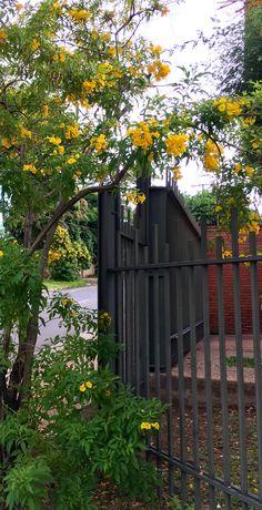Rejas y flores de Asunción-Paraguay
