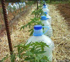 Пластиковая бутылка, как средство полива сада-огорода.. Обсуждение на LiveInternet - Российский Сервис Онлайн-Дневников