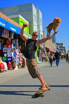 The Fly'n Lion, boardwalk skateboarding  Pomeranian dog and mohawk owner, Venice Beach, California