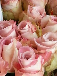 Pink avalanche rose