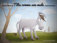 Têtu comme une mule: Personne particulièrement entêtée ou obstinée.