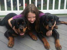 Rottweiler .2 big babies