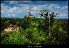 Tallest #Temple IV sticking out of the #Jungle in #Tikal, #Guatemala