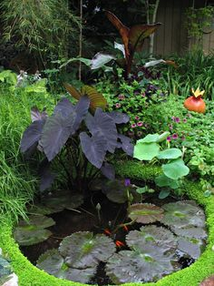 32 small fish pond designs look perfect for improving tiny garden landscape garden pond design 46 popular pond garden ideas for beautiful backyard Small Water Gardens, Fish Pond Gardens, Fish Garden, Bali Garden, Tropical Gardens, Small Fish Pond, Small Ponds, Small Garden Ponds, Pond Plants