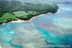 Anini Beach, Kauai - rated best snorkeling on the island. I can see why from the pictures! Huge coral beds.