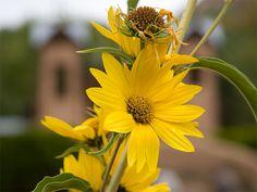 Garden at El Santuario De Chimayo Church in New Mexico
