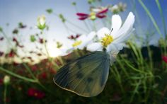 #butterfly #spring #sunshine