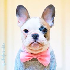 Yup, this is my profile picture!☺️ by aj_thefrenchie http://ift.tt/1IyXfiC