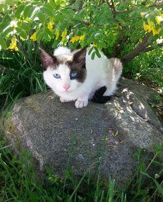 Lost Cat - Unknown - Brantford, ON, Canada N3T 5L5