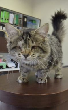 ABANDONED AND BLIND WITH NO EYES THIS CAT FINDS HOPE AND A NEW HOME
