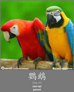 鹦鹉 - yīng wǔ - con vẹt - parrot