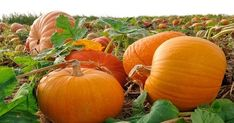 Is there anything that evokes the spirit of autumn more than the pumpkin? Get a recipe for a Pumpkin Martini here. Homemade Pumpkin Puree, Pumpkin Recipes, Fall Pumpkins, Halloween Pumpkins, Grow Pumpkins, Autumn Inspiration, Garden Inspiration, The Pumpkin Eater, Pumpkin Martini