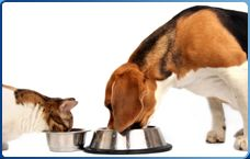 How to Start Treating Anything « DogtorJ.com :: Food Intolerance in Pets & Their People :: Home of The GARD