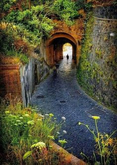 Greenery and tunnel