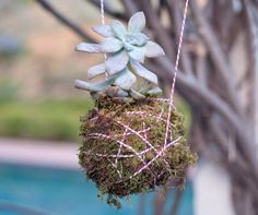 Inspired by the Japanese gardening method Kokedama, this funky arrangement involves wrapping clay and moss around the root of the plant before wrapping it in string. If you're a budding gardener, this is a great way to start learning about gardening hydroponics (gardening without traditional use of soil) or gardening aeroponics (gardening using air as a growth medium). Now, let's get to it!