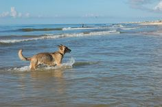 Miles of beaches where you can enjoy with your dog!  St. George Island FL