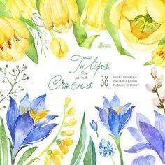 Tulips & Crocus Spring Flowers Separate Clipart. por OctopusArtis