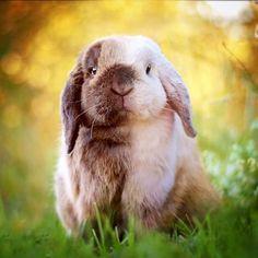 Rabbit Life, Fox And Rabbit, Bunny Rabbit, Funny Bunnies, Baby Bunnies, Cute Bunny, Cute Creatures, Beautiful Creatures, Bunny Paws