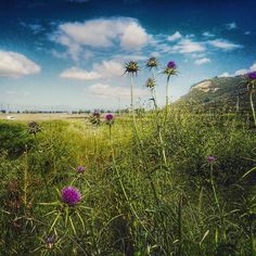 #Pisa #campagna #countryside #sky #skyporn #clouds #cloudporn #ig_italy #ig_pisa #ig_tuscany #ig_captures #vivo_pisa #volgopisa #top_italia_photo #best_toscana_pics #wild #flowers #montipisani #horizon #sunnyday #nature #natureaddict #perlestradedellatoscana #paesaggitoscani #toscana_super_pics #loves_toscana #loves_italia #amazing #colorful #instapisa by assogiorgettigram