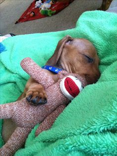 Nap time with sock monkey!