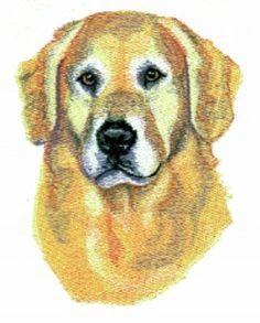 Assorted Breed Dog T-Shirts Tee T Shirt Golden Doodle Golden Retriever Gordon Setter Great Dane Great Pyrenees Irish Wolf Hound on Etsy, $18.94 CAD