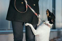 Dog collar Textura Bot